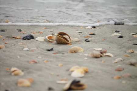 Assortment of sea shells in the sand being approached by remnants of a wave..  All shells are natural, unique, and arranged by mother nature. 写真素材