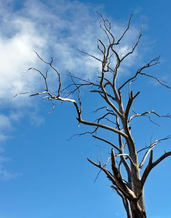 a dead tree against blue sky
