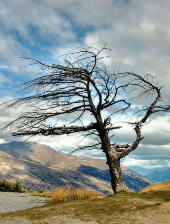 a dead tree against mountain background Stock Photo