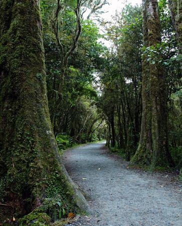New Zealand rainforest landscape Stock Photo