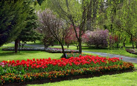 Tulip garden in the springtime Stock Photo