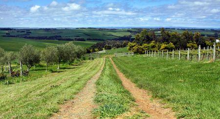 A vineyard in Victoria, Australia Stock Photo