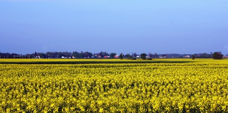 southwestern ontario: a mustard seed farm in Southwestern Ontario Stock Photo