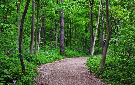 a trail through a ontario forest in spring Stock Photo