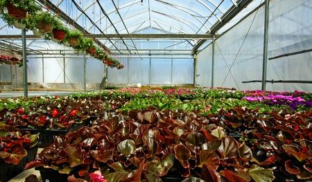Spring flowers in a garden center photo