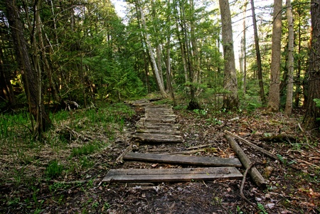 wooden boardwalk  leading into the forest