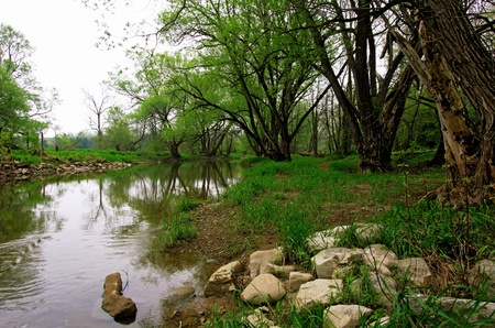 a green forest with river