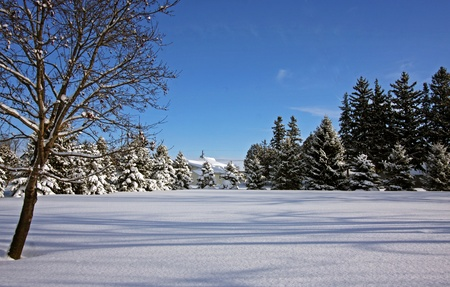 Country winter scene on a sunny day