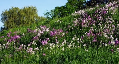 a field of fire weeds on a hill
