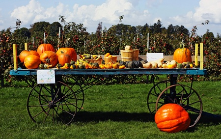 a mixture of autumn gourds Stock Photo