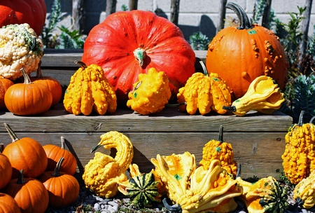 a variety of autumn gourds