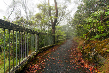 a foggy day at Point Lookout in New England National Park, NSW, Australia
