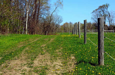 a farm leading into a green forest Stock Photo