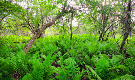 a forest filled with ferns