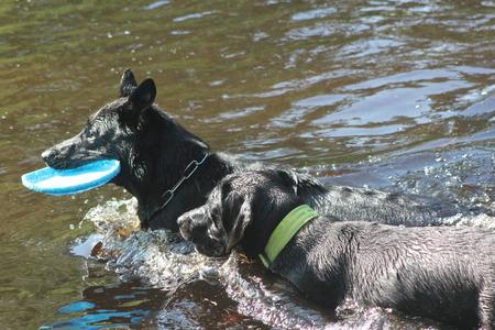 perros jugando: Perros que juegan
