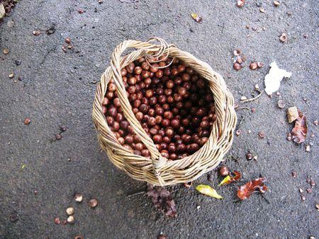 macadamia: panier de macadamia