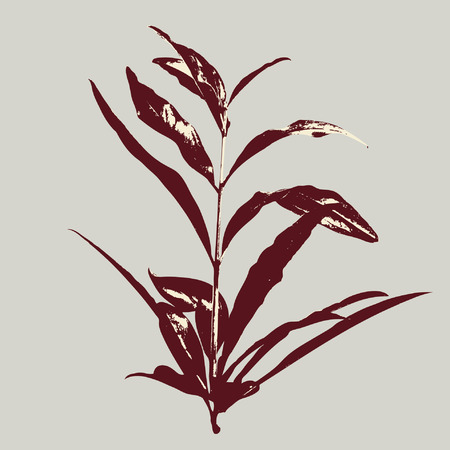 love plant Vector