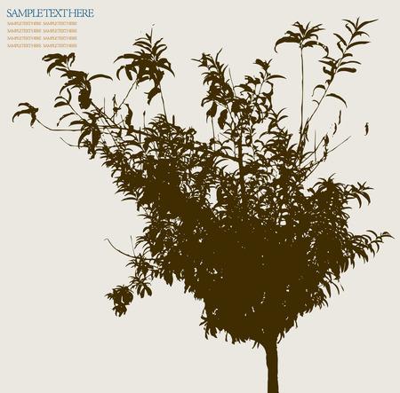 tree Stock Vector - 5194534