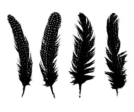 pluma blanca: Pluma