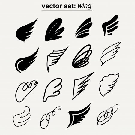 feathers: wing