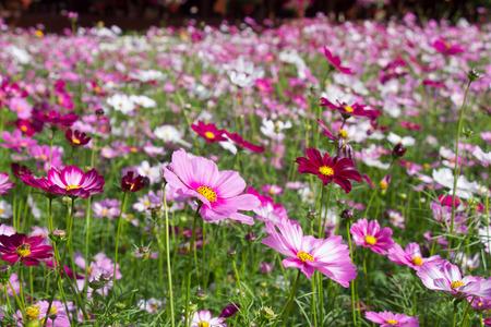 Belles fleurs colorées d'hiver Banque d'images - 49935453