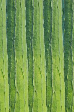 calabacin: calabac�n verde Foto de archivo