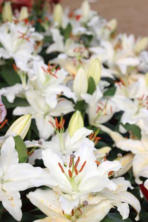beautifull: Beautifull winter Flowers