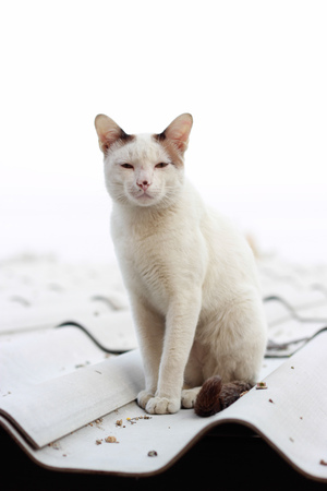 earth moving: Cute white cat