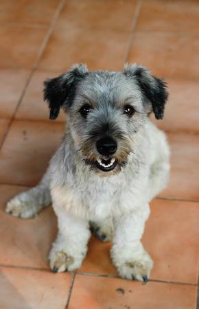 puppy love: Amor de cachorros