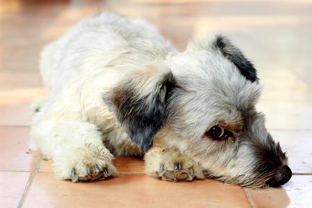 amor adolescente: Amor de cachorros