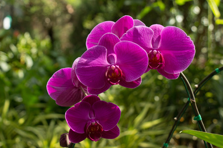 Beautiful orchid.colorful winter Flowers