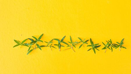Green Leaf on Yellow Backgrounds Summer Concept