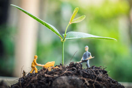 Miniature people team works to inspect and plant trees for a green world project. (We plant trees for a better world) Stock Photo
