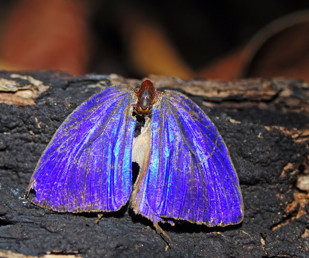 colorful Dead butterfly in nature photo
