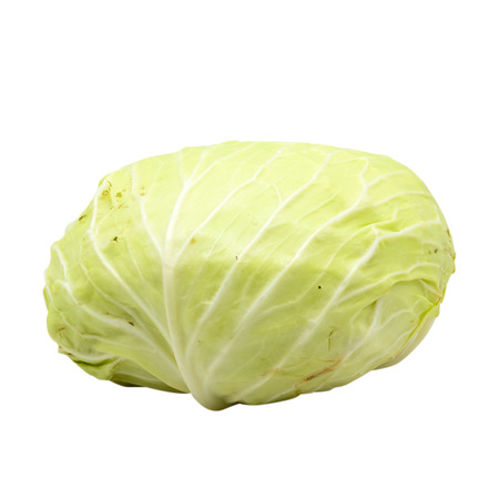 nontoxic: Cabbage Non-toxic, isolated on white background