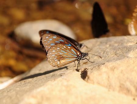 paper kites: butterfly on the stone in nature