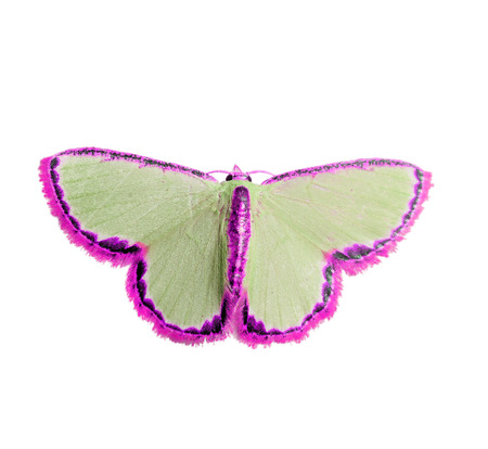 Beautiful Butterfly isolated Stock Photo