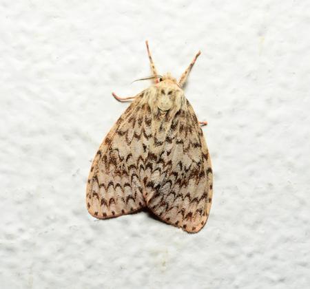 moth: moth butterfly