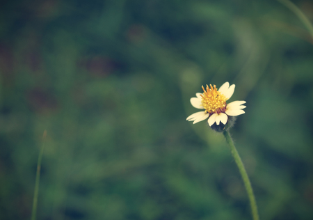 Flowering grass background, vintage style. Stock Photo