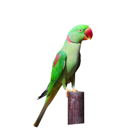 seize: Colorful bird The parrot  isolated on white background