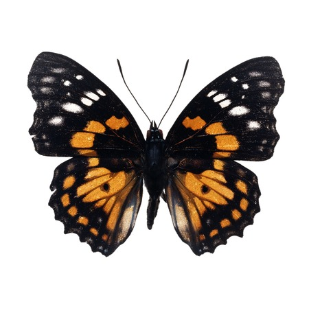 Beautiful  Black and yellow butterfly Stock Photo