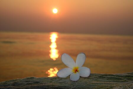 Plumeria flowers with sunrise background