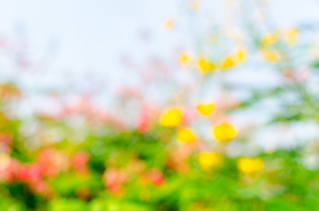 boke: blur and boke yellow flower background