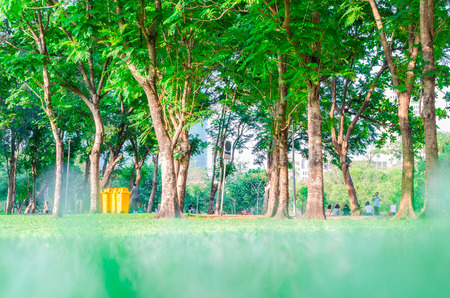excercise: green grass in the park ,relax and excercise Stock Photo
