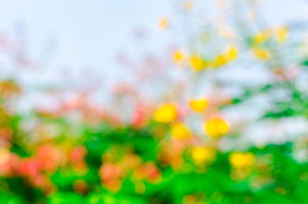 boke: blur and boke  flower background
