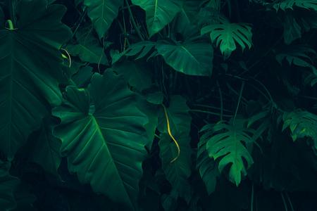 Natura pozostawia zielone tło w ogrodzie na wiosnę. ciemne tropikalne liście naturalne tło.
