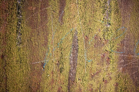 rusty metal background and moss. Stock Photo