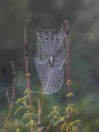 herbst: taufeuchte Spinnweben an Gräsern an einem nebligen Morgen im Herbst