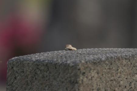 Hoja en una tumba de piedra