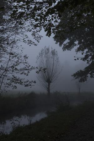 herbst: Waldweg im Nebel